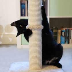 Cat playing with scratching post