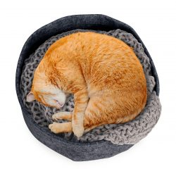 Orange cat sleeping in round felt bed