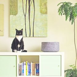 Cat sitting on bookshelf next to round cat bed