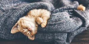 Ginger kitten sleeping on blanket