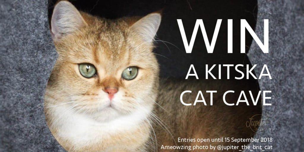 Orange cat with the text 'Win a Kitska cat cave'