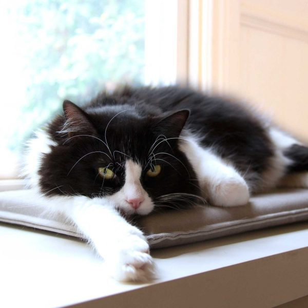 Black and white cat on grey pet mat