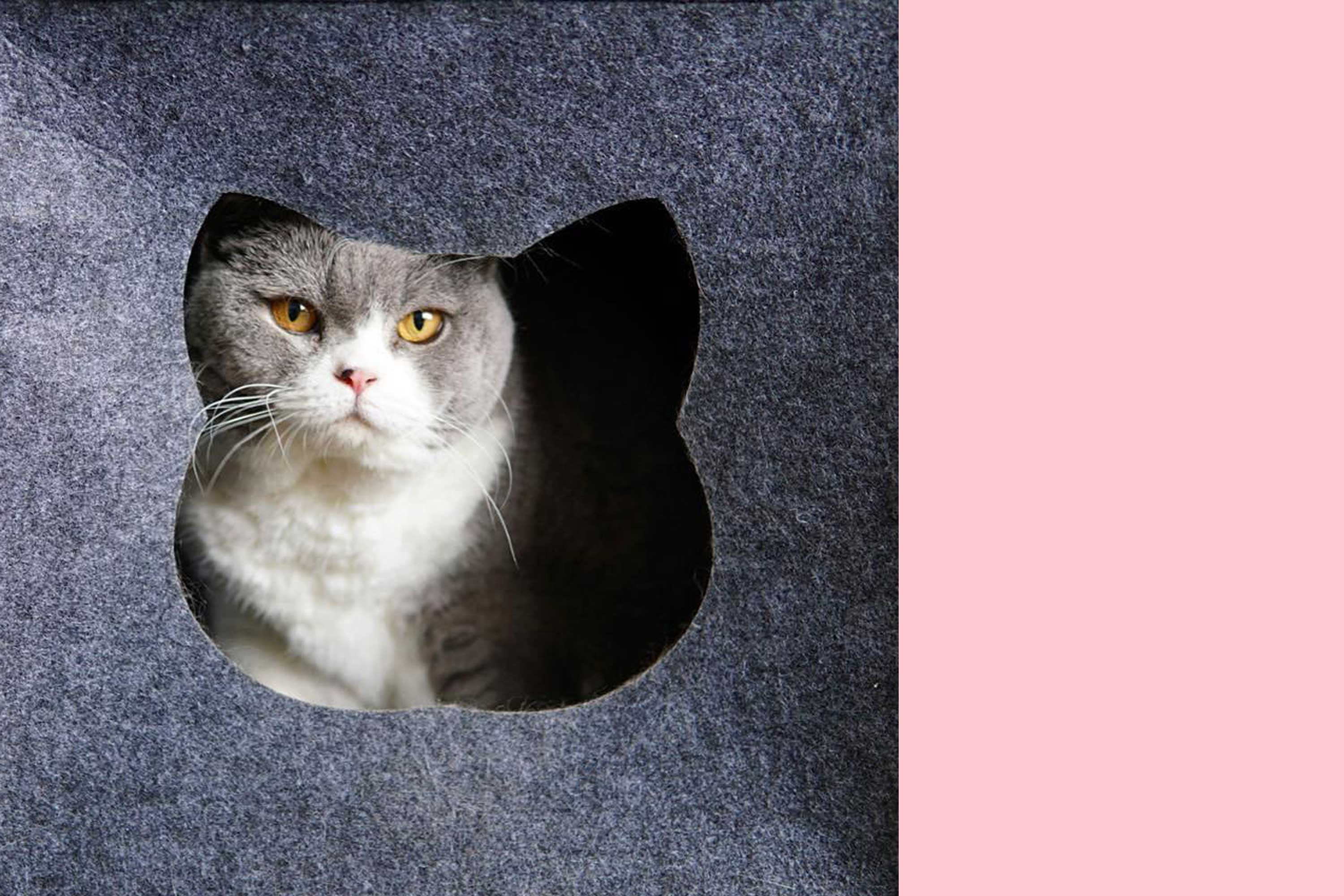 Grey and white cat in felt cave