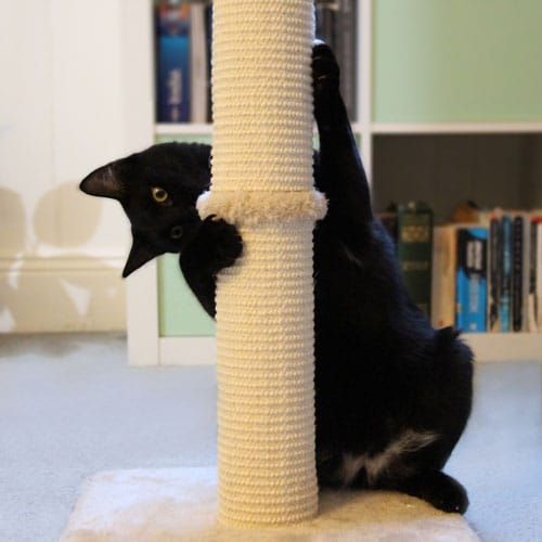Black cat clawing scratching post